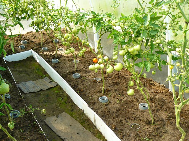 Ольга кощеева сад — огород